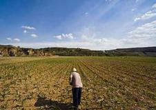 济南78个村完成土地确权试点 确定土地承包经营权